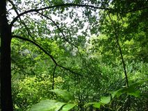 Зеленый рай в лесе стоковое изображение rf