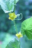 зеленый расти стоковое изображение rf