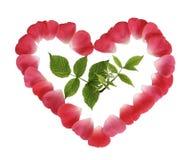 зеленый росток красного цвета лепестков сердца Стоковые Изображения