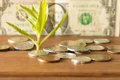 Зеленый росток монеток на предпосылке 1 долларовой банкноты Стоковое фото RF