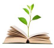 Зеленый росток от открытой книги стоковое фото