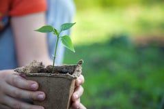 зеленый росток Стоковые Фото