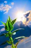 зеленый росток стоковая фотография