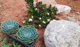 Зеленый сад в Бразилии стоковая фотография rf