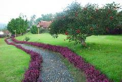 Зеленый сад Стоковые Фото