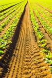 Зеленый саженец в утре Стоковые Фотографии RF