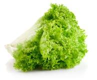 зеленый салат листьев Стоковое Изображение RF