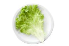 зеленый салат салата 2 Стоковые Изображения RF