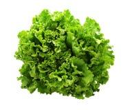 зеленый салат Стоковые Изображения RF