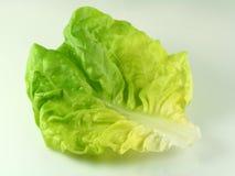 зеленый салат Стоковые Фото