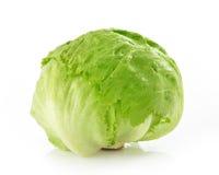 Зеленый салат Alcapucci айсберга Стоковые Изображения RF