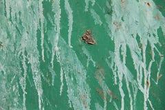 зеленый сбор винограда листа металла grunge Стоковое Фото