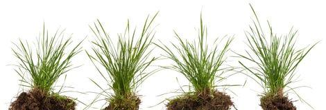 Зеленый свежий изолированный луг травы Стоковое Фото