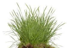 Зеленый свежий изолированный луг травы Стоковая Фотография