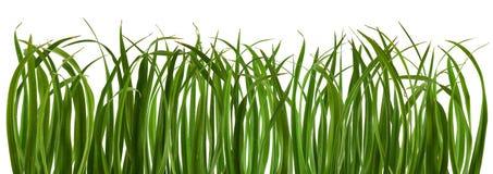 Зеленый свежий изолированный луг травы Стоковые Фотографии RF