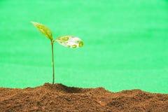 Зеленый свежий росток Стоковая Фотография RF
