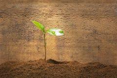 Зеленый свежий росток Стоковое Изображение RF