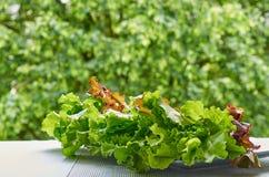 Зеленый свежий салат салата выходит на запачканную предпосылку природы Ингридиенты для здоровых smoothies салата или вытрезвителя Стоковое Изображение RF