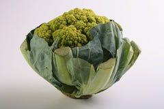 зеленый свет cauliflower стоковое фото