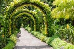 Зеленый сдобренный ландшафт на садах Сингапура ботанических стоковое изображение rf