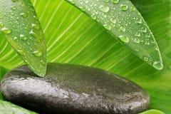 зеленый серый камень листьев стоковое фото rf
