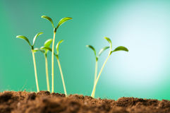Зеленый сец - принципиальная схема новой жизни Стоковые Изображения
