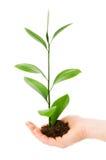 зеленый сец руки Стоковые Изображения