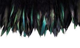 Зеленый, синь и бирюза взведите курок изолированным пер ` s Стоковое Фото