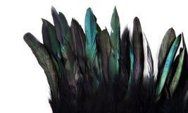Зеленый, синь и бирюза взведите курок изолированным пер ` s Стоковое Изображение