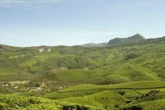 зеленый слой Стоковая Фотография RF