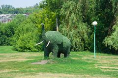 Зеленый слон зеленых растений Стоковое фото RF