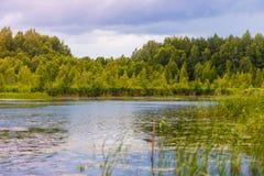 Зеленый смешанный лес на береге около поверхности воды стоковые изображения