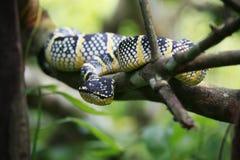 зеленый смотря змеенжш Стоковое Фото