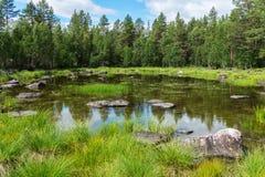 Зеленый спрус над голубым озером, Швецией Стоковые Фото