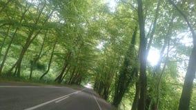 Зеленый тоннель стоковые фото