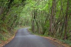 зеленый тоннель Стоковая Фотография RF