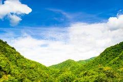 Зеленый тропический лес Стоковые Изображения