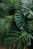 Зеленый тропический фон природы листьев, цветочная композиция с m Стоковые Фотографии RF