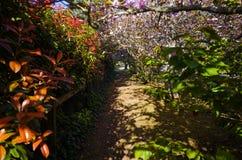 Зеленый тротуар с цветками деревьев травы Стоковая Фотография RF