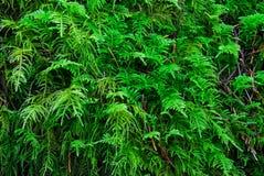 зеленый утес лишайников Стоковые Фотографии RF
