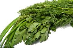 Зеленый фенхель лука петрушки Стоковая Фотография