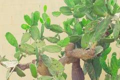 Зеленый фотоснимок детали завода кактуса Стоковые Фото