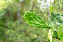 Зеленый фотоснимок детали завода кактуса Стоковое Изображение