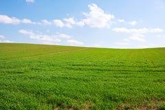 зеленый холм солнечный Стоковое фото RF