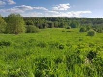 Зеленый холм с взглядом горизонта и голубым небом стоковые фотографии rf