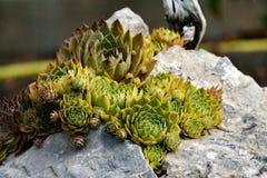 Зеленый цветок на утесе Стоковые Фотографии RF