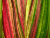 зеленый цвет абстракции Стоковая Фотография RF