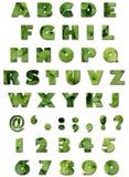 зеленый цвет алфавита выходит текстура лета Стоковая Фотография