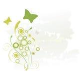 зеленый цвет бабочек Стоковое фото RF
