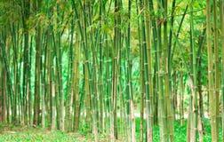 зеленый цвет бамбука предпосылки Стоковое Изображение